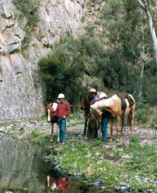 Yarramba Horse Riding - Accommodation Sunshine Coast