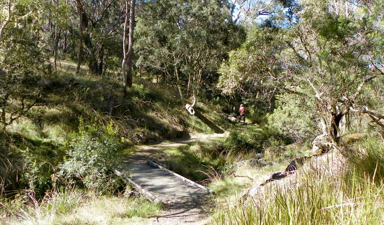 Wollomombi walking track - Accommodation Sunshine Coast