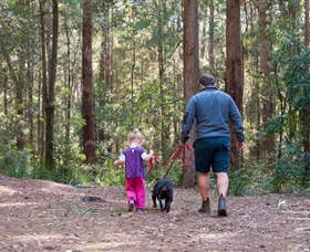 Olney State Forest - Watagan Mountains - Accommodation Sunshine Coast