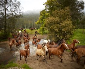 Glenworth Valley Horse Riding - Accommodation Sunshine Coast