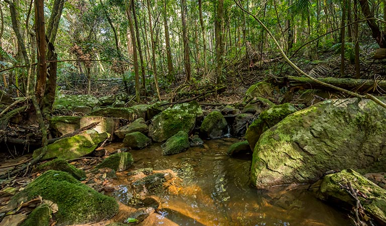 Palm Grove Nature Reserve - Accommodation Sunshine Coast