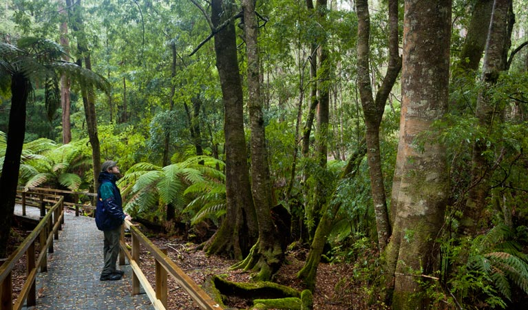 Monga National Park - Accommodation Sunshine Coast