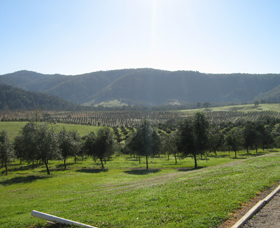 Hastings Valley Olives - Accommodation Sunshine Coast