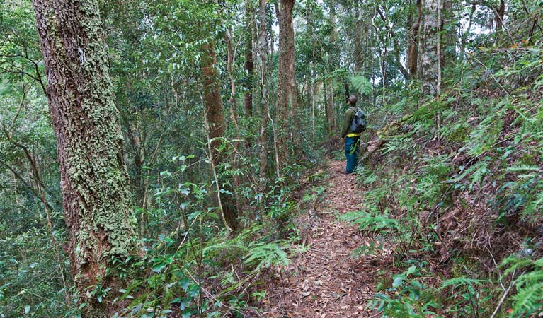 Blackbutt walking track - Accommodation Sunshine Coast