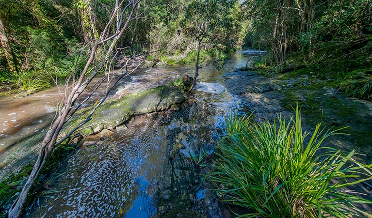 Dawson River walking track - Accommodation Sunshine Coast