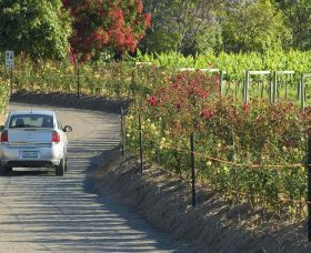 Cassegrain Wines - Accommodation Sunshine Coast
