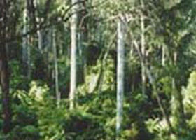Lind National Park - Accommodation Sunshine Coast