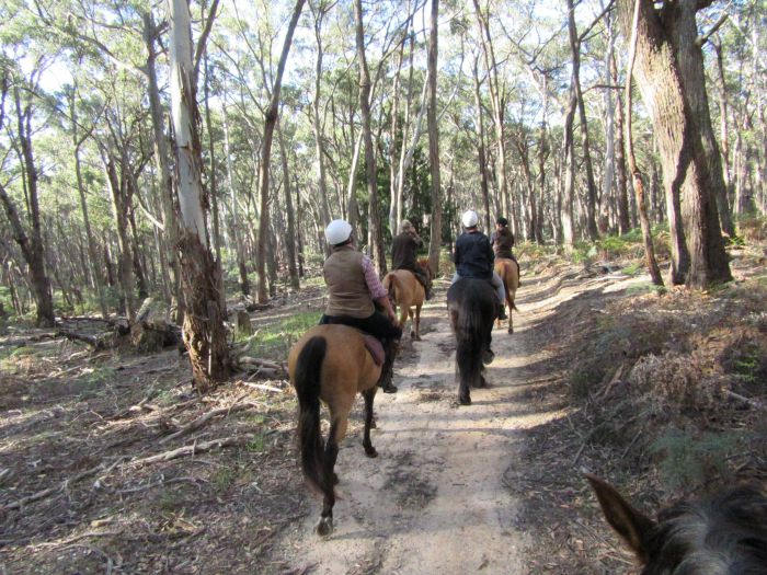Silver Brumby Trails - Accommodation Sunshine Coast
