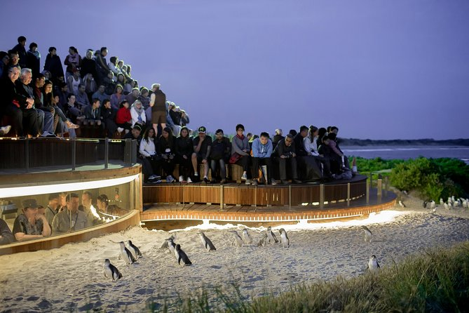 1 Day Private Phillip Island Tour VIP Charter up to 9 People - Accommodation Sunshine Coast