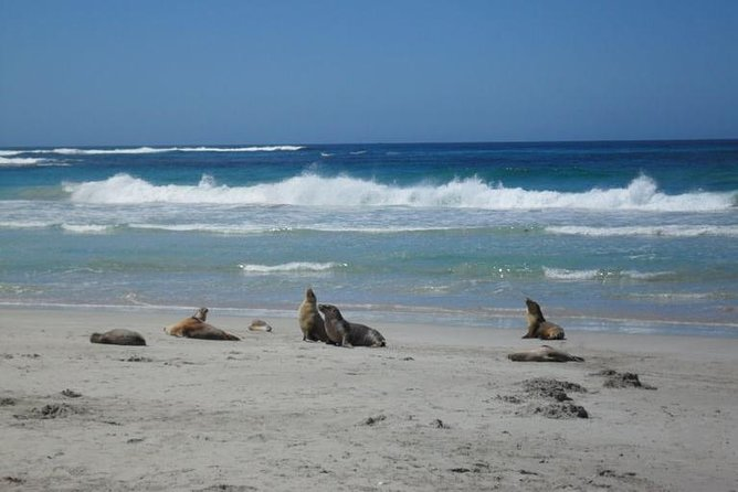 Kangaroo Island in a Day Tour from Adelaide - Accommodation Sunshine Coast