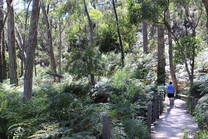 Self-Guided Waterfall Gully to Mount Lofty Hike from Adelaide - Accommodation Sunshine Coast