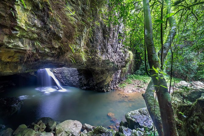 Springbrook and Tamborine Rainforest Tour Including Natural Bridge and Glow Worm Cave - Accommodation Sunshine Coast