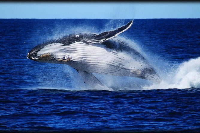 Whale Watching Cruise from Redcliffe Brisbane or the Sunshine Coast - Accommodation Sunshine Coast