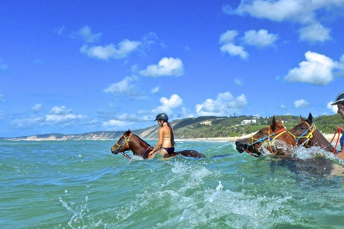 Horse Swimming Ride from Rainbow Beach - Accommodation Sunshine Coast