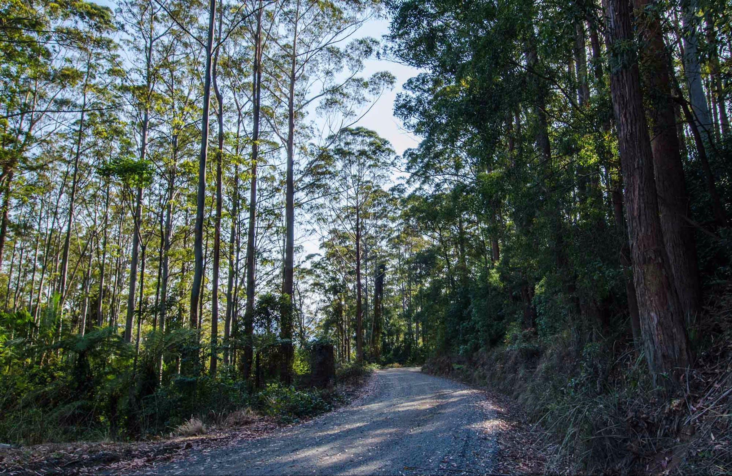 Hastings Forest Way Touring Route - Accommodation Sunshine Coast