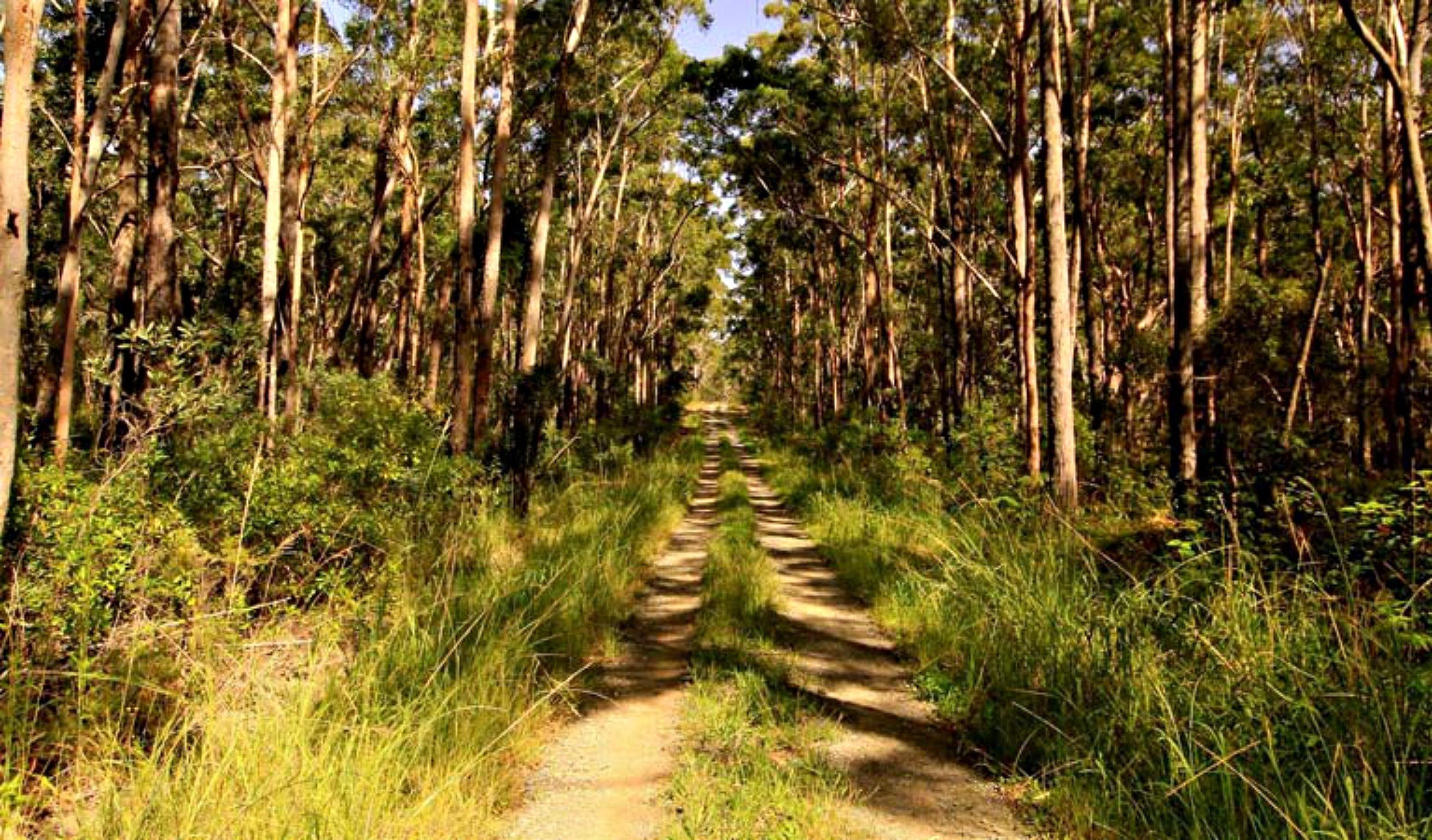 Mining Road Fire Trail Old Gibber Road Rire Trail - Accommodation Sunshine Coast
