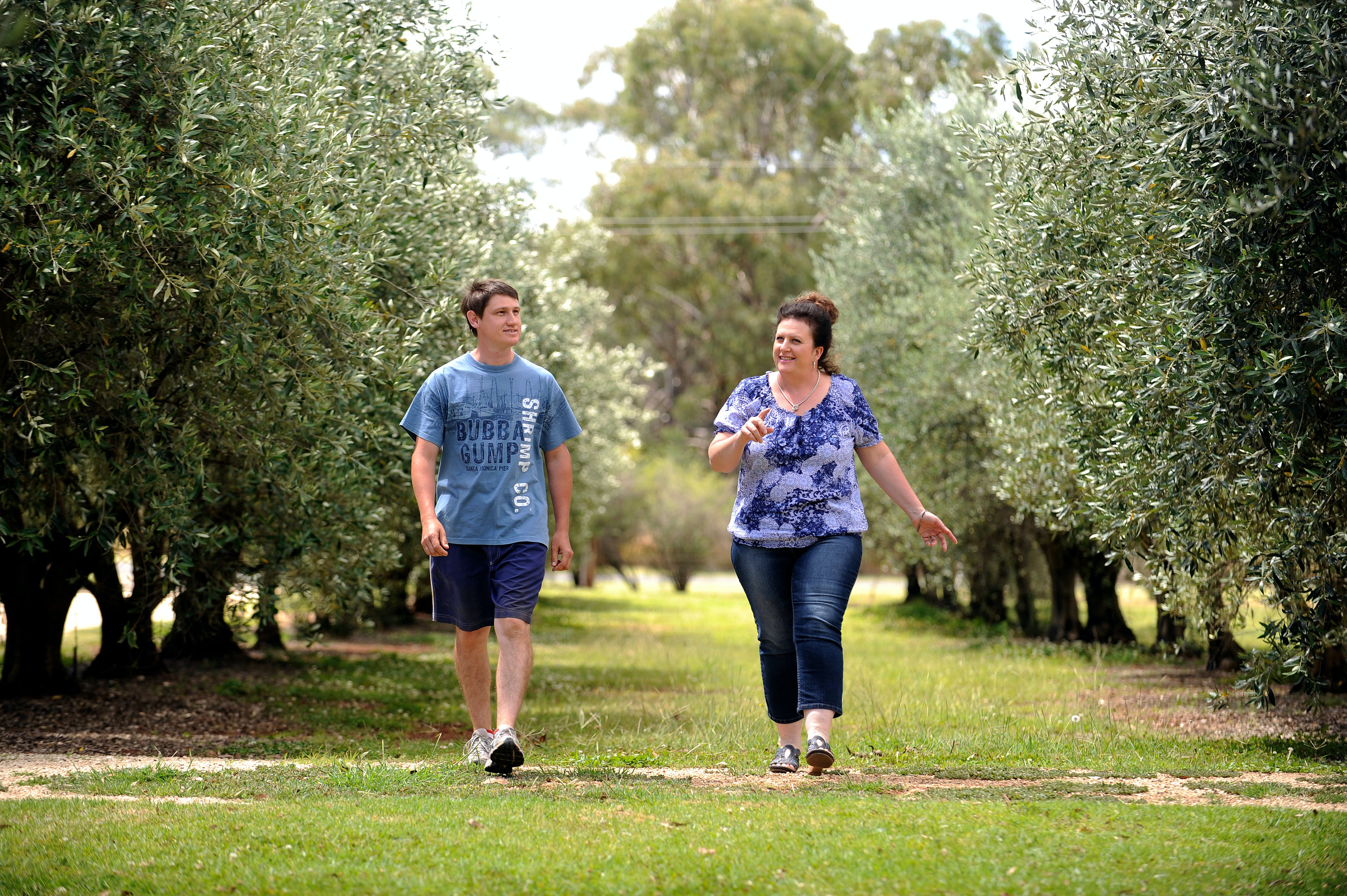 Olives of Beaulieu - Accommodation Sunshine Coast