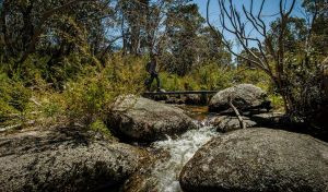 Pallaibo walking track - Accommodation Sunshine Coast