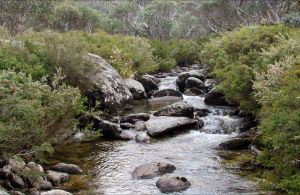 Thredbo River Track - Accommodation Sunshine Coast