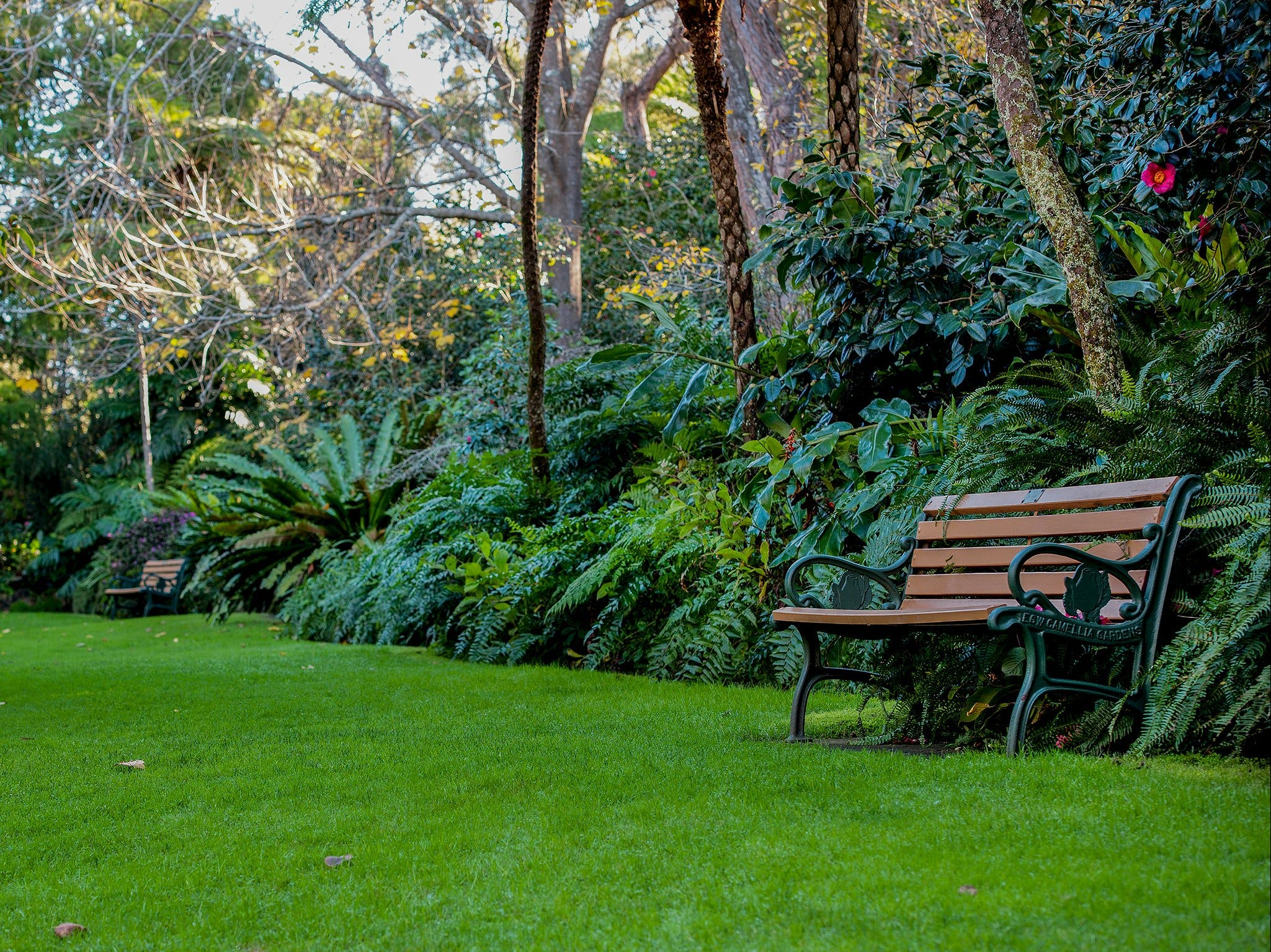 EG Waterhouse National Camellia Gardens - Accommodation Sunshine Coast