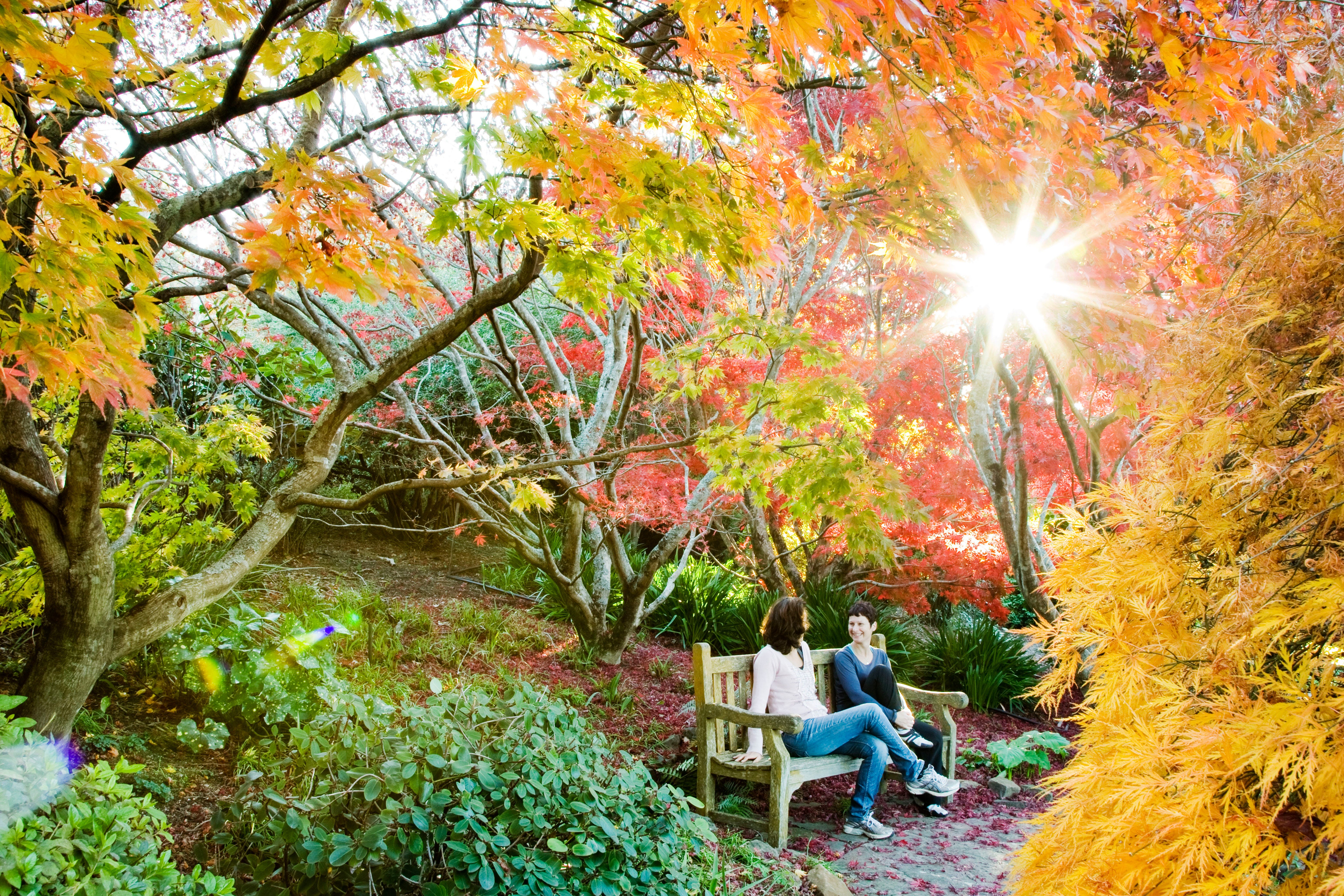 The Blue Mountains Botanic Garden Mount Tomah - Accommodation Sunshine Coast