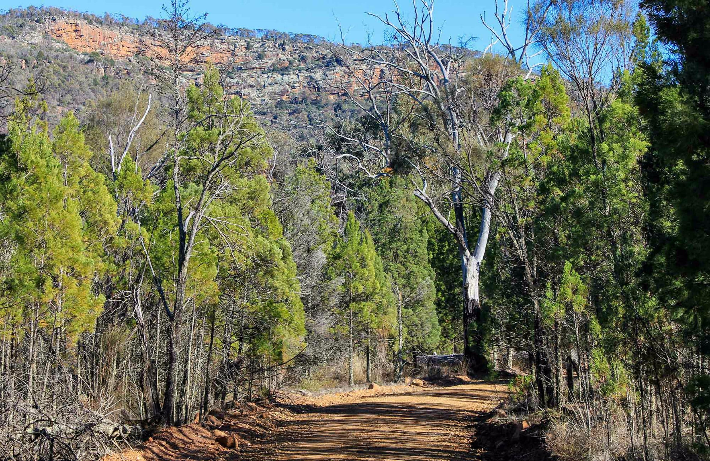 Weddin Gap to Black Spring Loop Trail - Accommodation Sunshine Coast