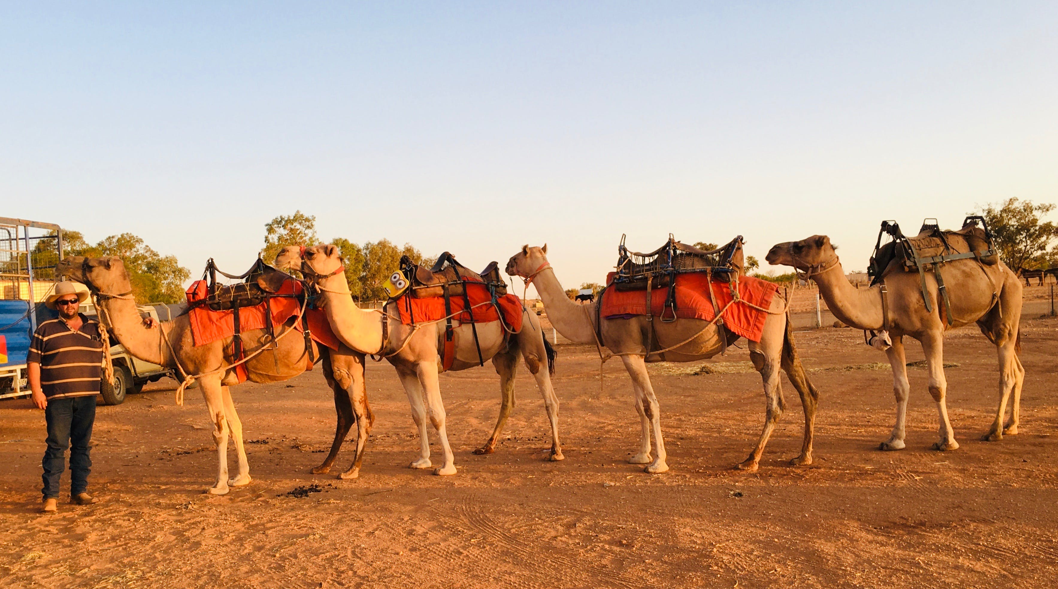 Broken Hill Camels - Accommodation Sunshine Coast