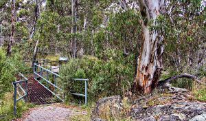 Sawpit Walking Track - Accommodation Sunshine Coast