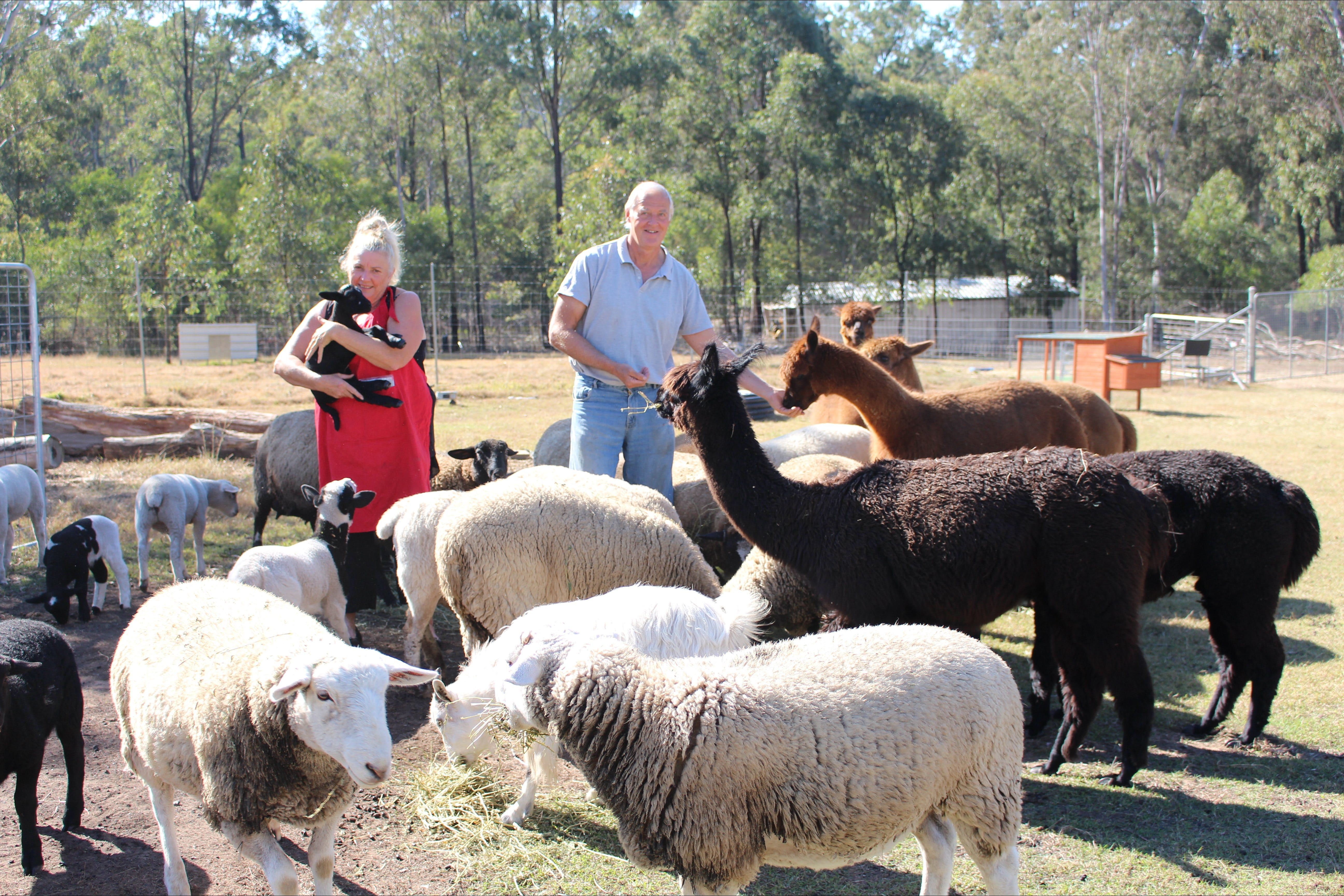Haigslea EWE Nique Hobby Farm - Accommodation Sunshine Coast
