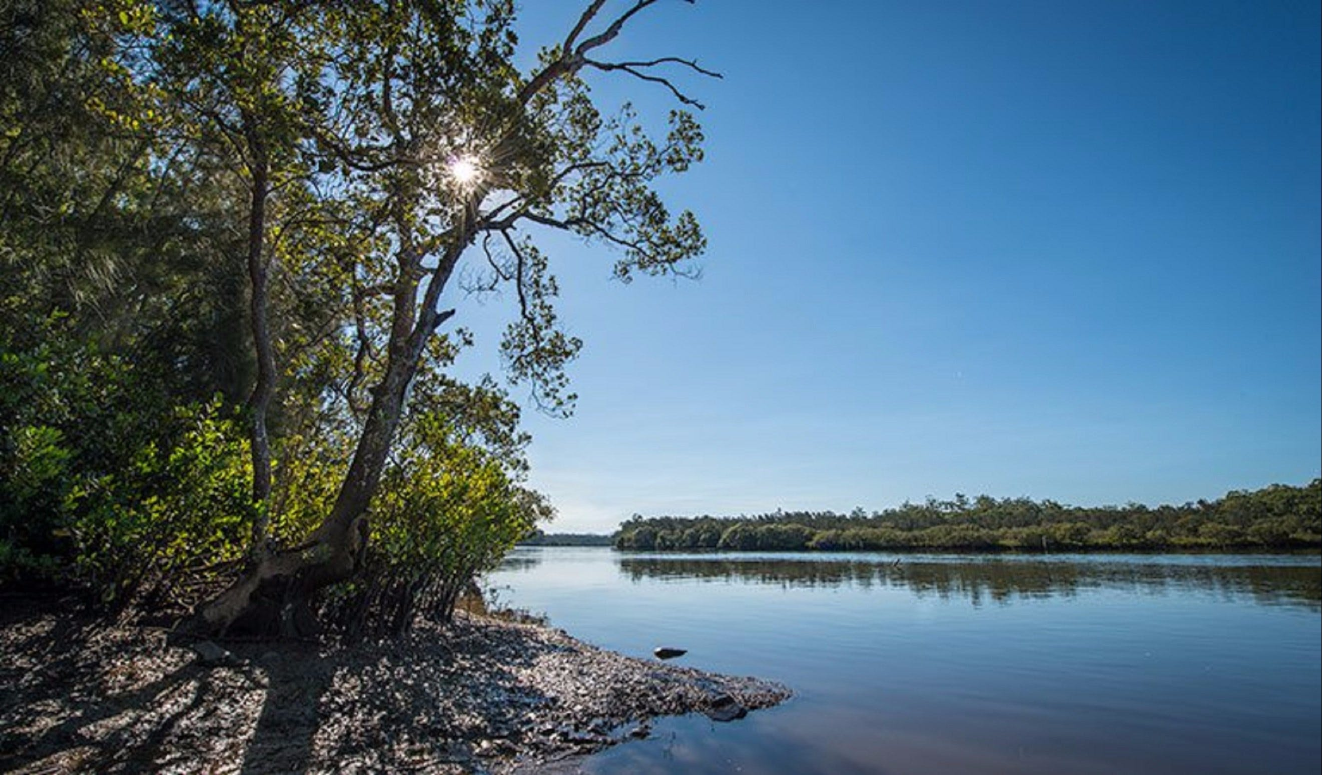 Karuah River National Park and Nature Reserve - Accommodation Sunshine Coast