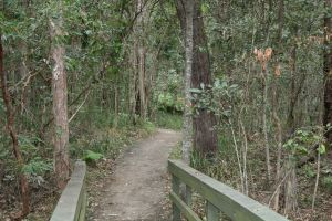 Springwood Conservation Park - Accommodation Sunshine Coast
