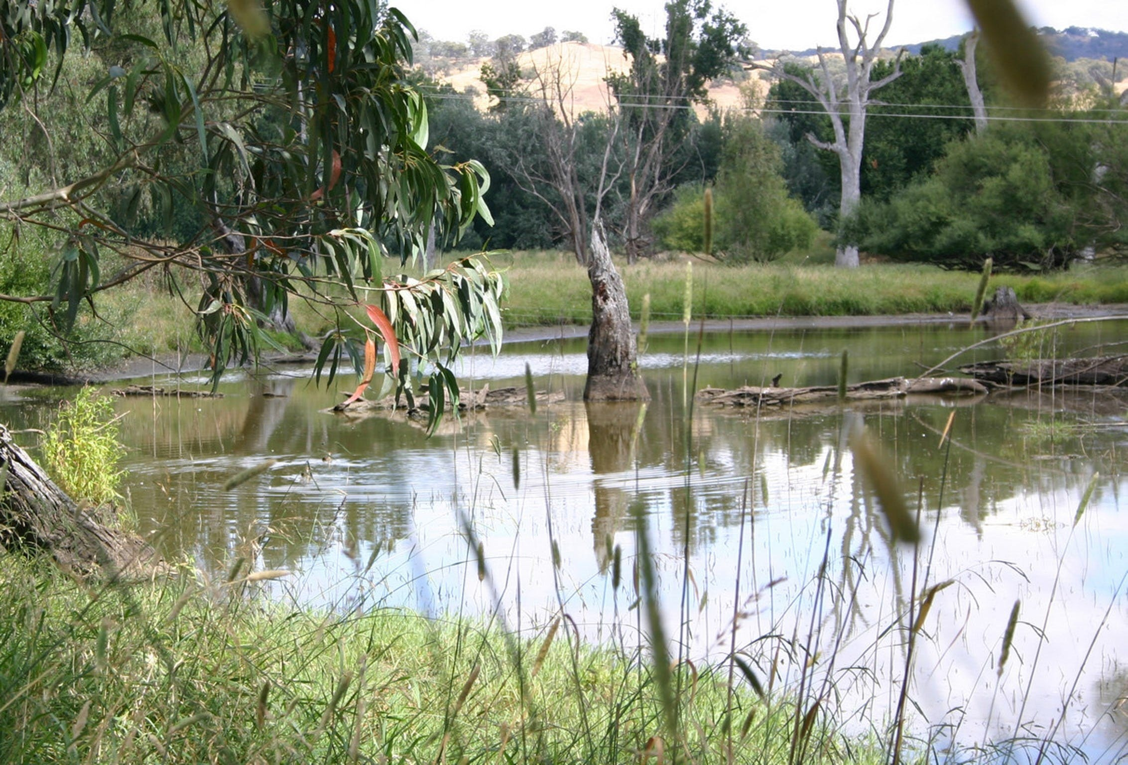 Tumut Wetlands - Accommodation Sunshine Coast