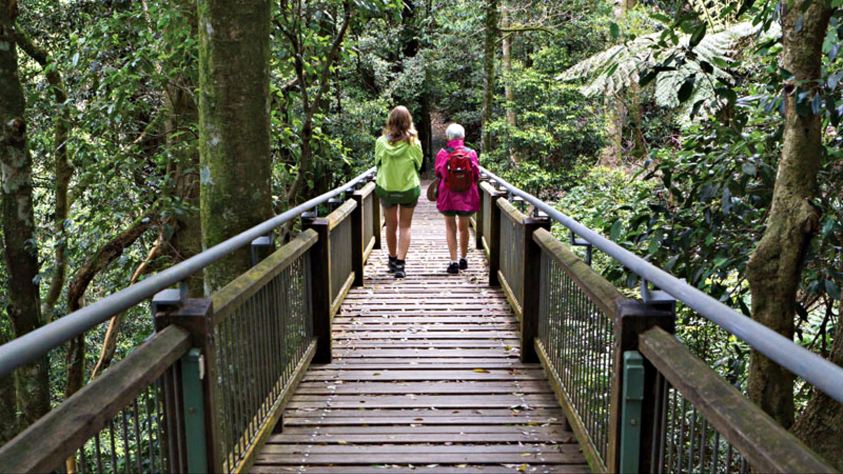 Wonga Walk - Accommodation Sunshine Coast