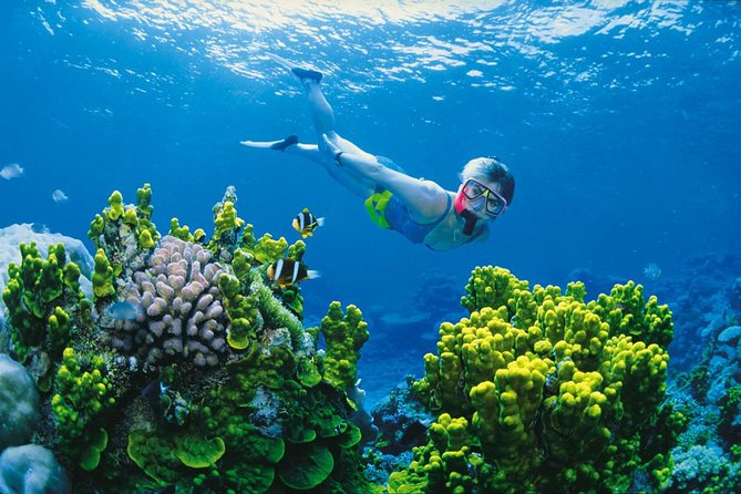 Full Day Snorkel In The Great Barrier Reef - Accommodation Sunshine Coast