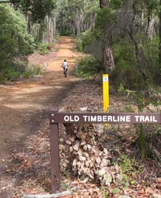 Old Timberline and Sidings Rail Trails - Accommodation Sunshine Coast