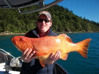 Gone Fishing by Coral Sea Fishing Charters Airlie Beach - Accommodation Sunshine Coast