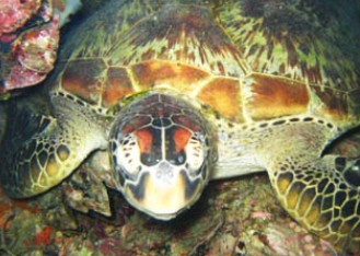Adrenalin Snorkel and Dive - Accommodation Sunshine Coast