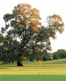 Cowra Golf Club - Accommodation Sunshine Coast