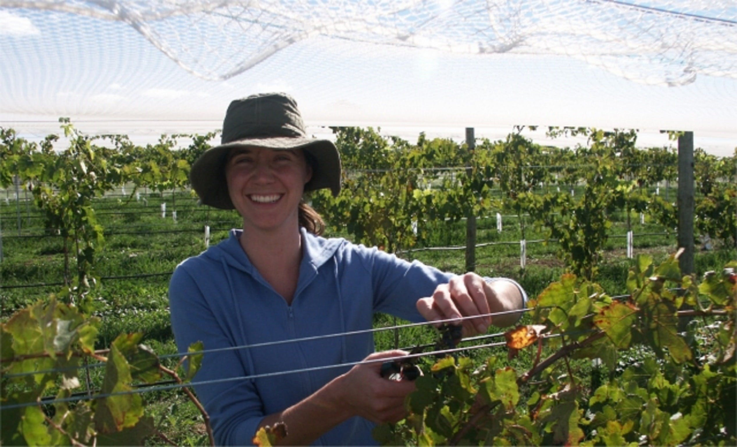 Kingsdale Wines - Cellar Door Wine Tastings - Accommodation Sunshine Coast