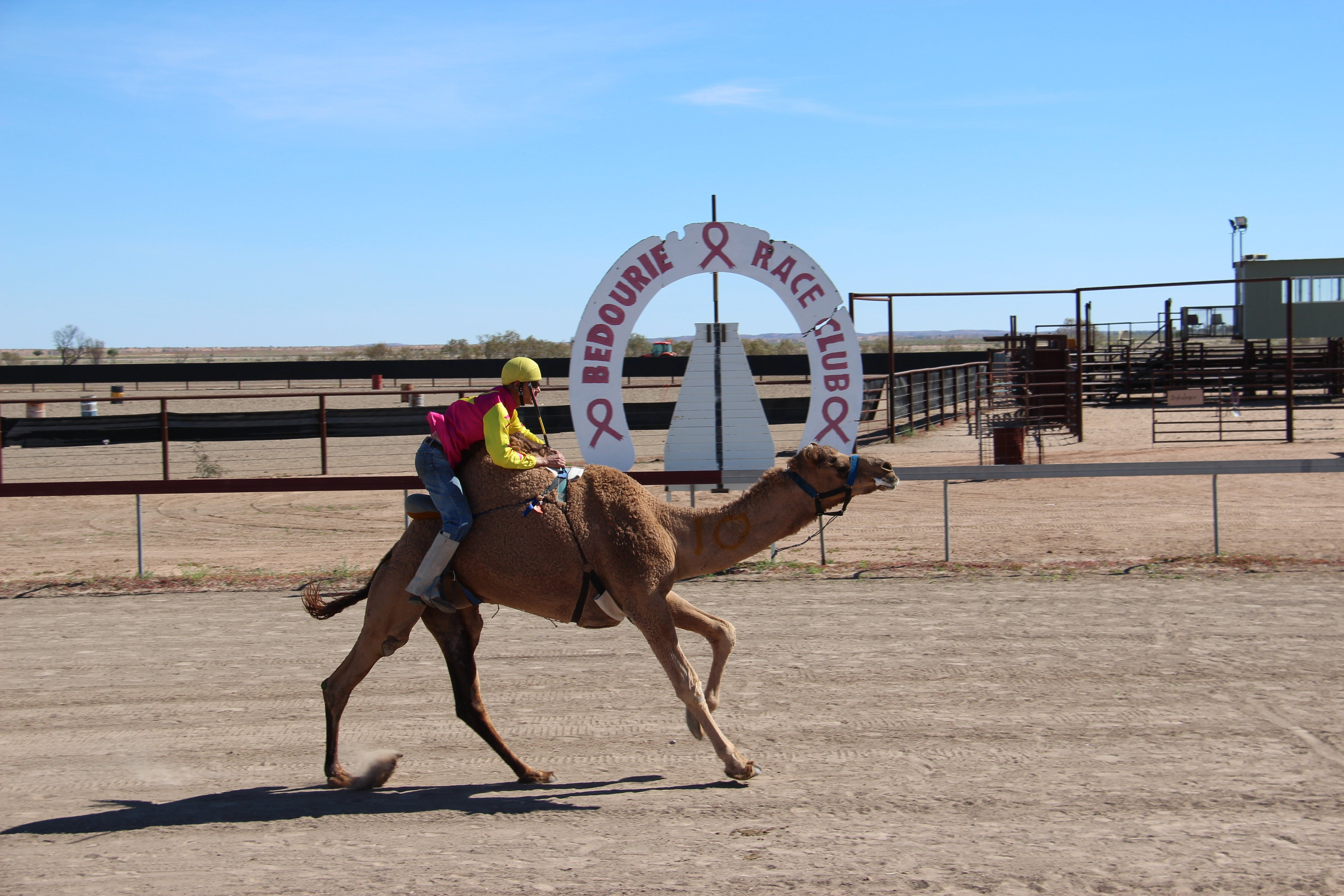 Bedourie Camel and Pig Races and Camp oven Cook-off - Accommodation Sunshine Coast