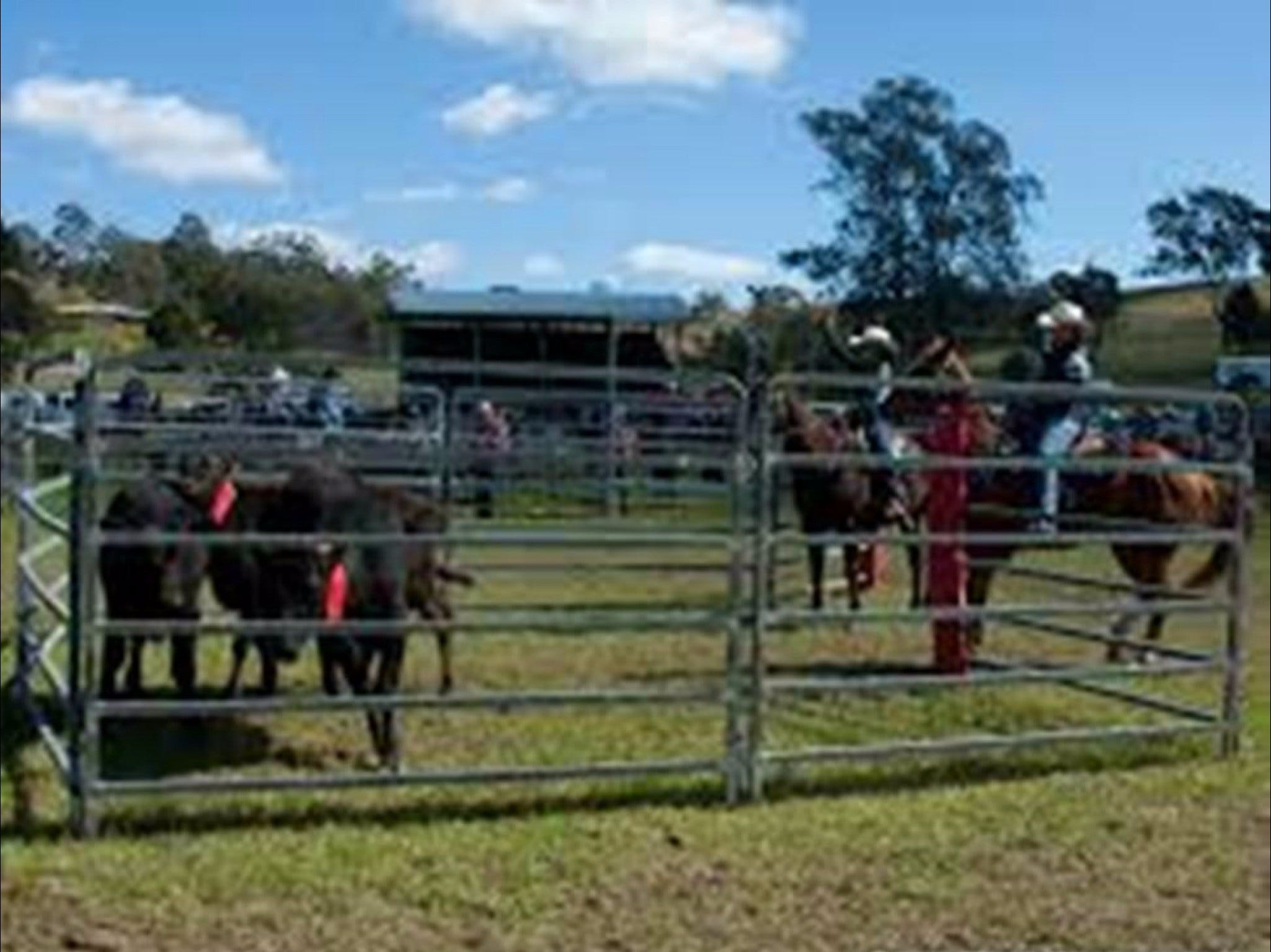 Dungog Team Penning - Accommodation Sunshine Coast