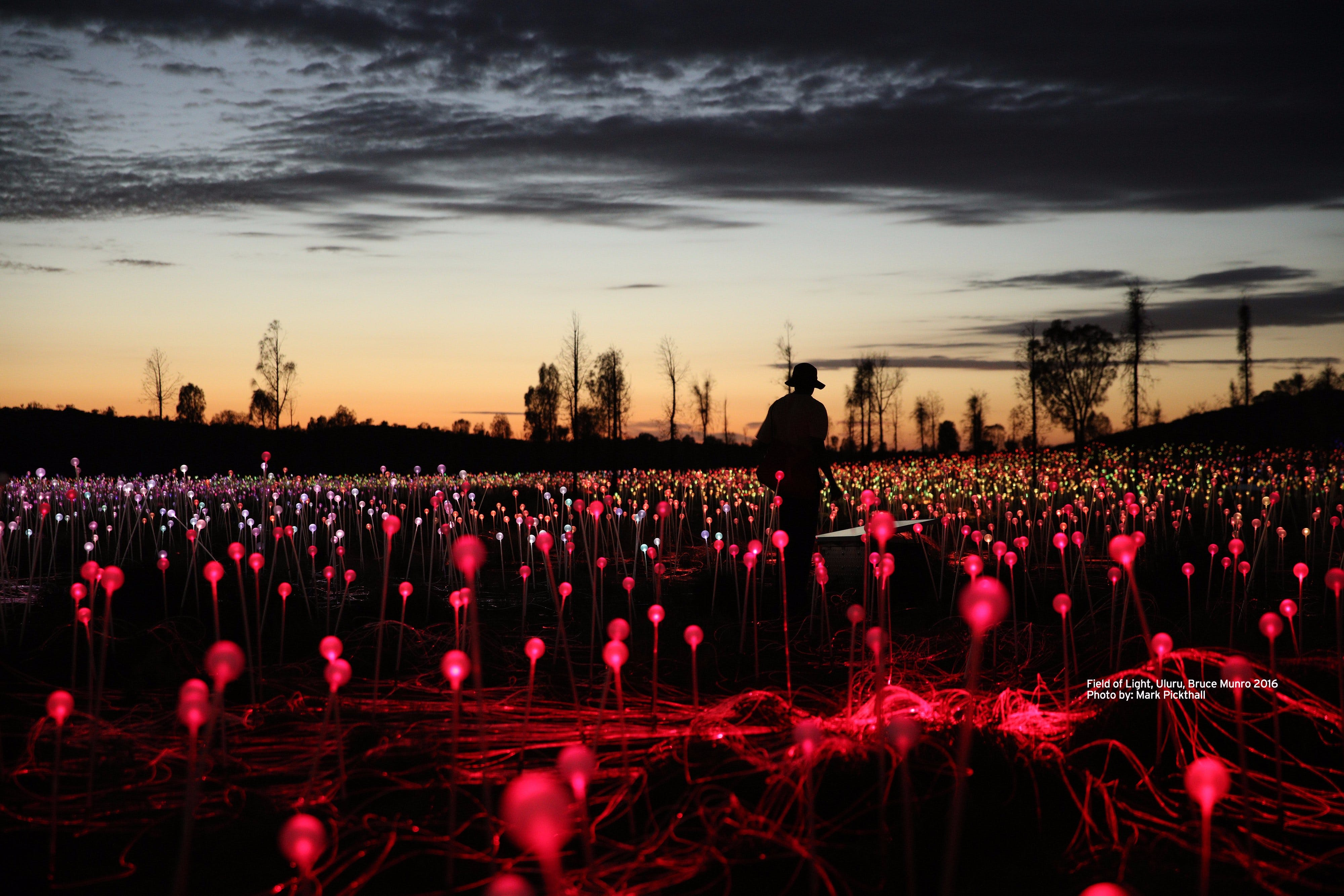 Field of Light Uluru - Accommodation Sunshine Coast