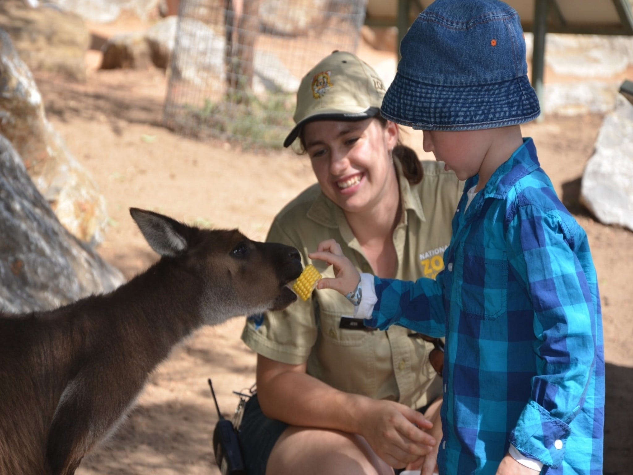 Mums and Cubs And Dads too - Accommodation Sunshine Coast