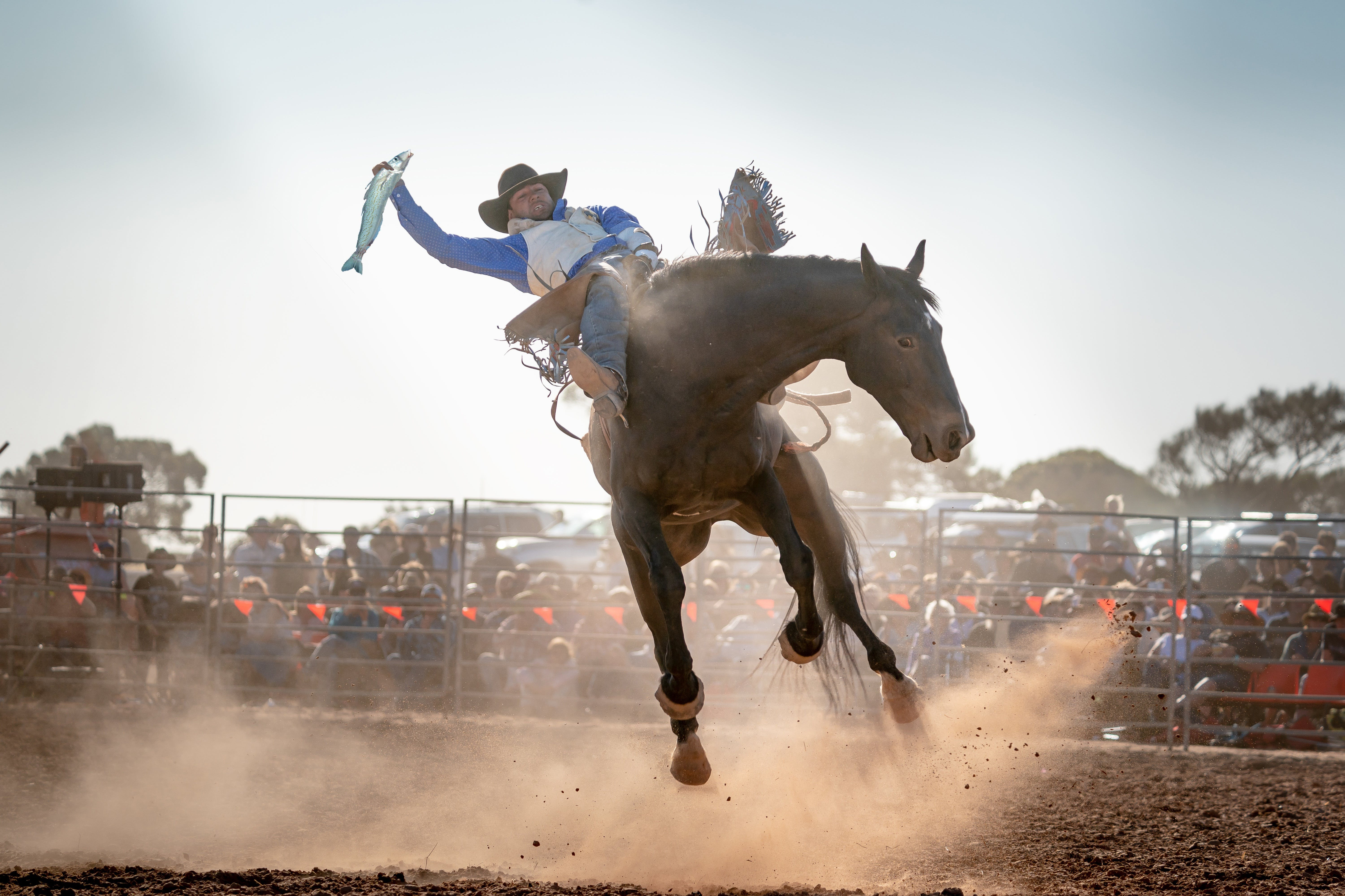 Rodeo by the Sea - Streaky Bay - Accommodation Sunshine Coast