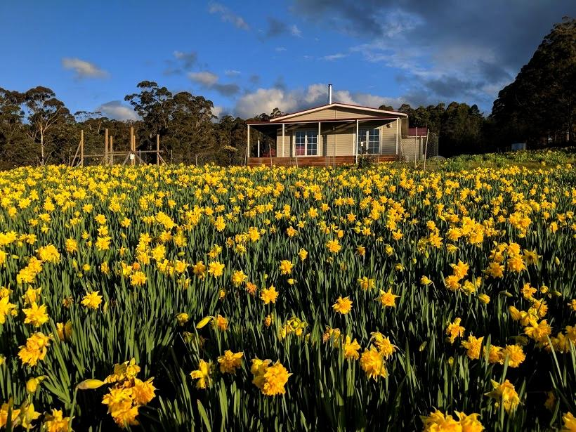 Mountain Blue Guest House - Accommodation Sunshine Coast