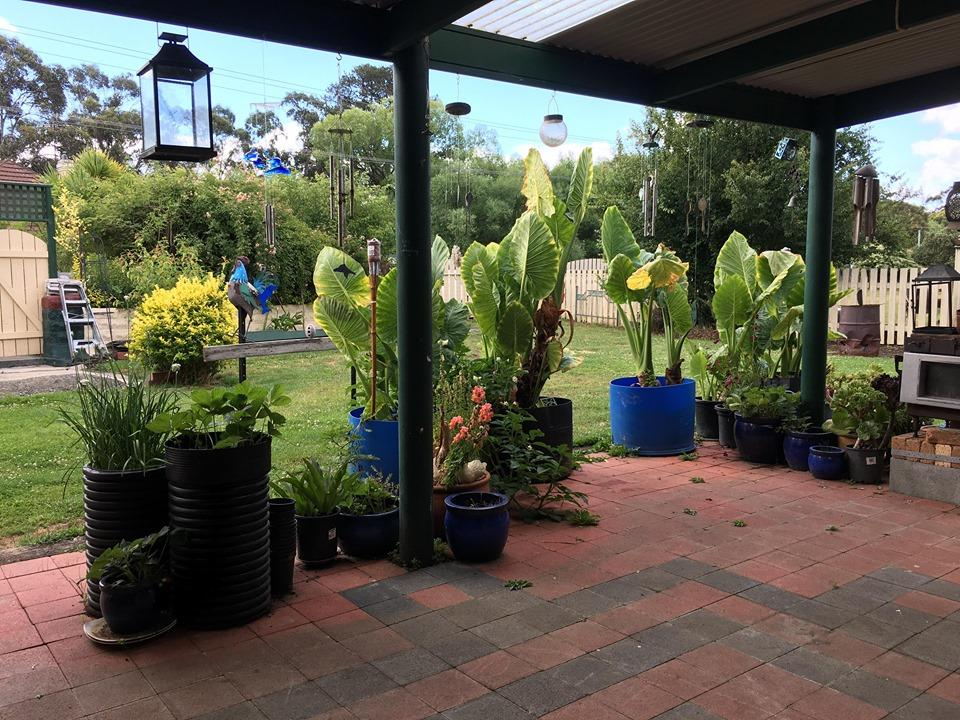 Blue Wren Bungalow - Accommodation Sunshine Coast