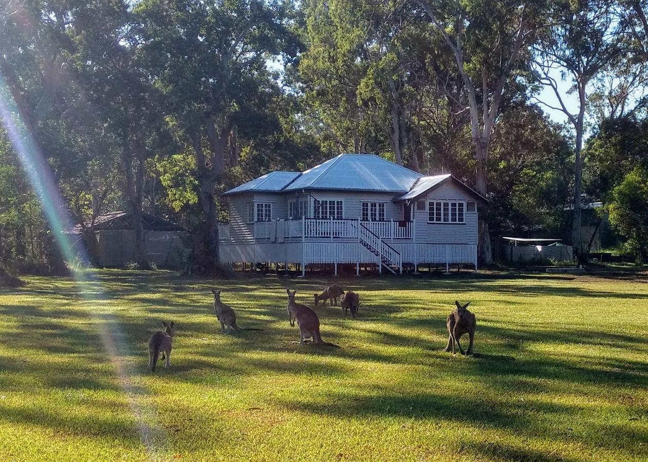 Lake Weyba Noosa Lodge  Kangaroos - Accommodation Sunshine Coast